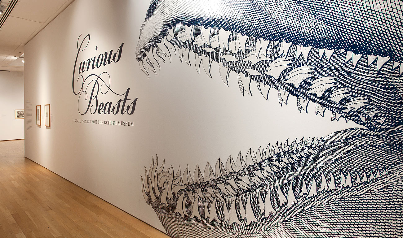Curious Beasts Wall Design